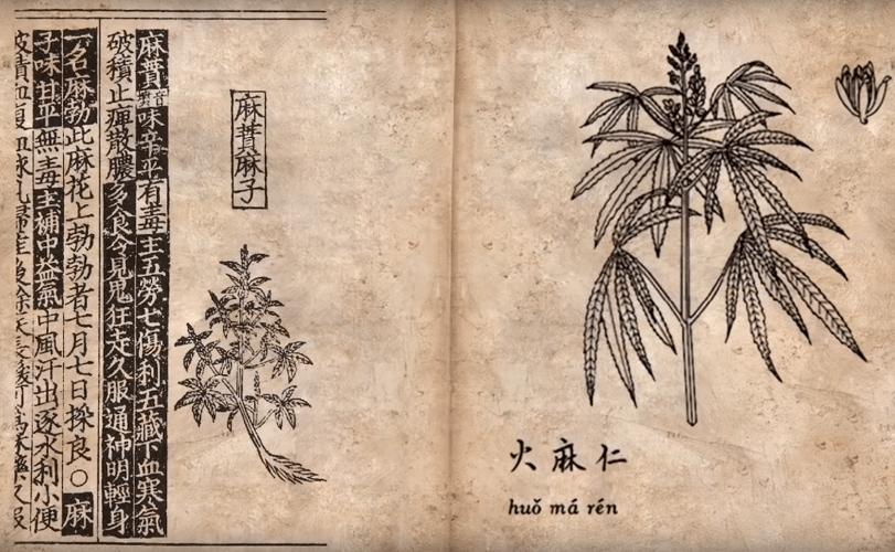 Pure Cannabis Oil